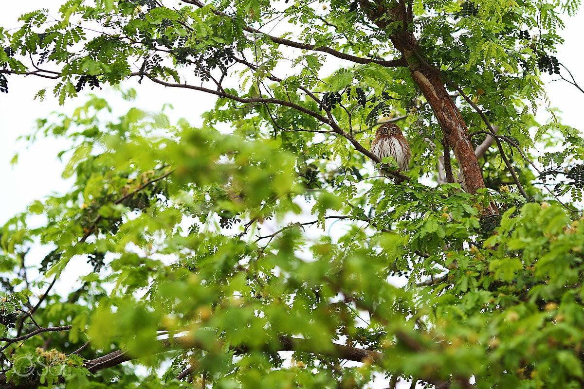 beautiful owl watching wedding Xcaret Park Playa del Carmen Mexico.