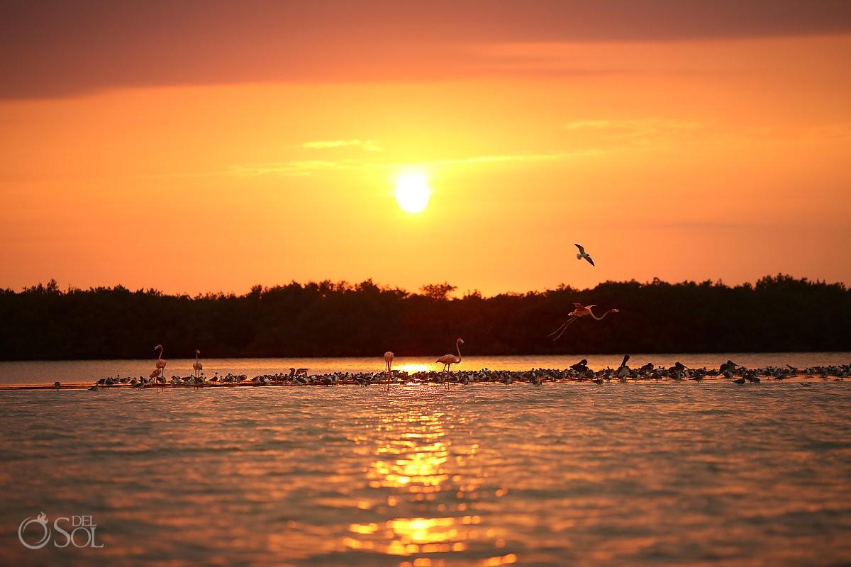 Rio lagartos at sunset pink flamingos pink romance del sol photography #ExperienciasInfinitas