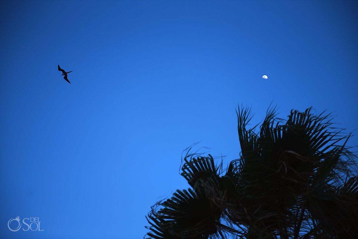 Destination Wedding Dreams Riviera Cancun Resort, Mexico