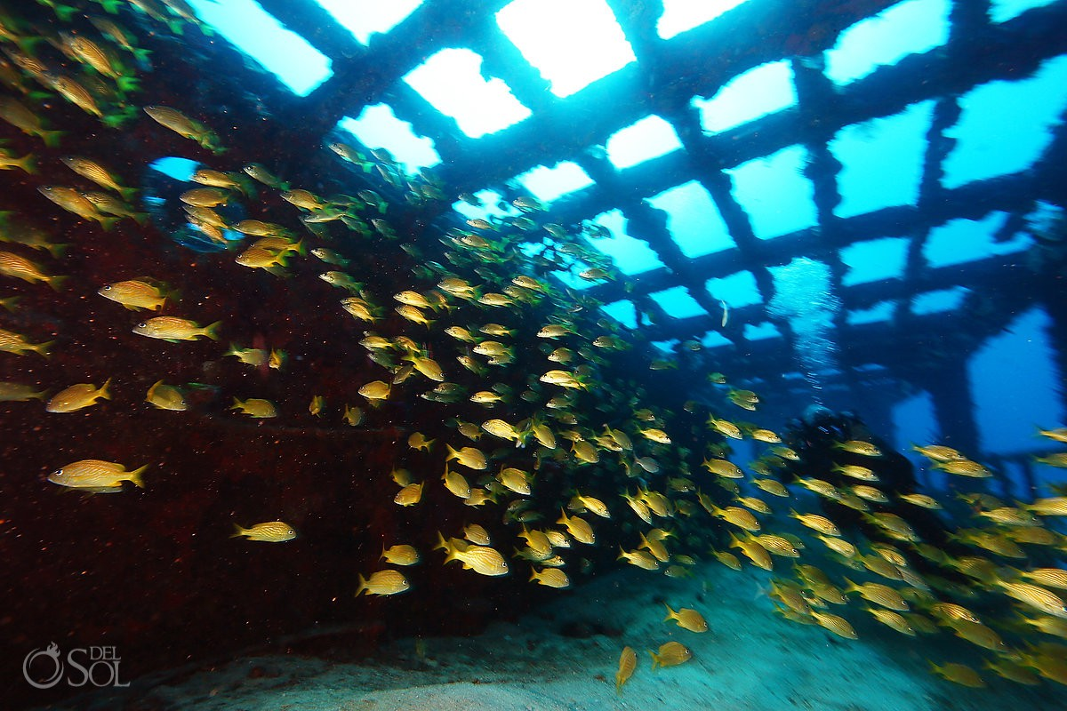 School of fish at shipwreck