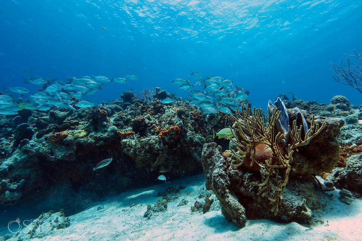 Underwater photography coral reef with fish swimming at Cozumel
