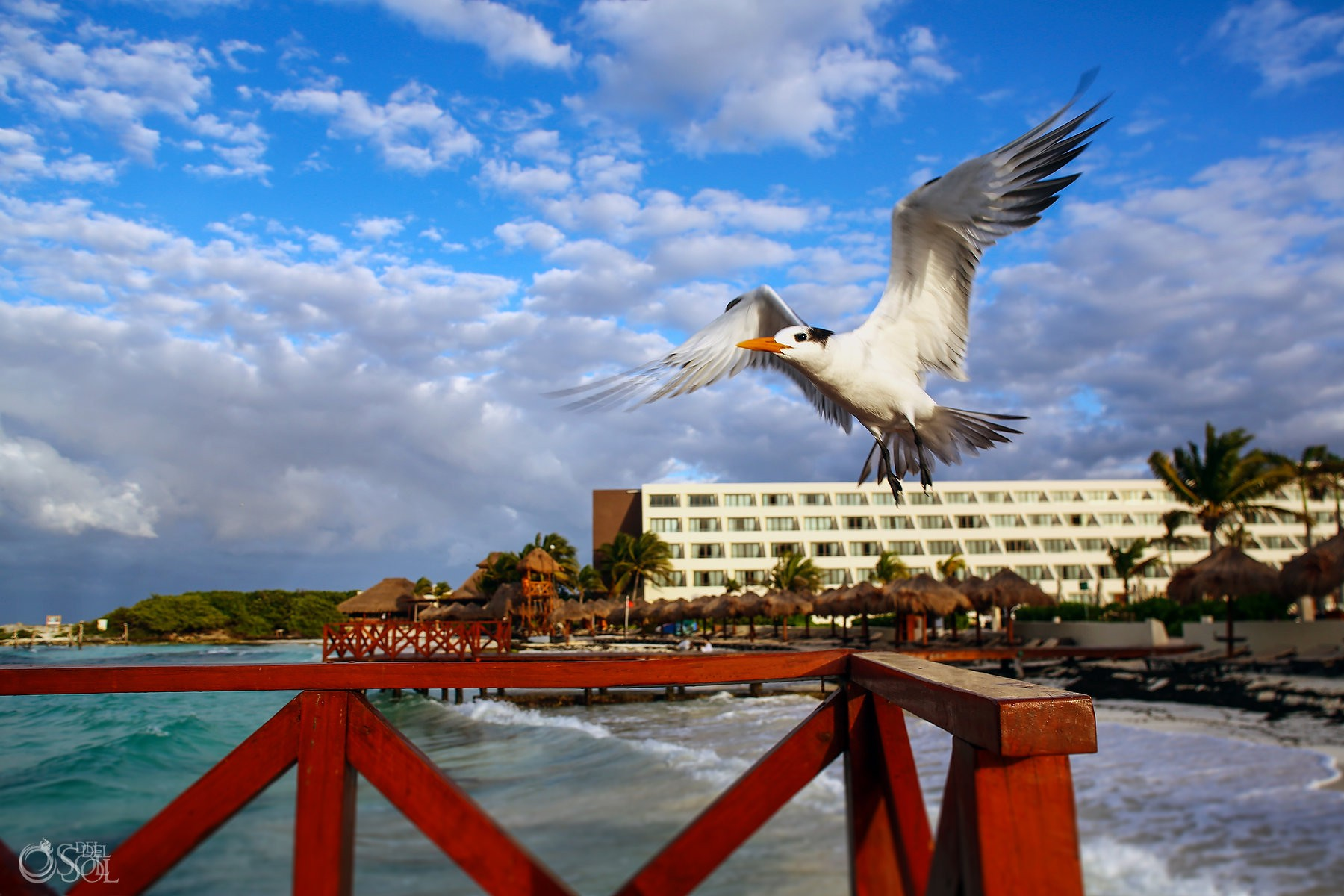 seagull flying at Hyatt Ziva Cancun, Mexico del sol photography