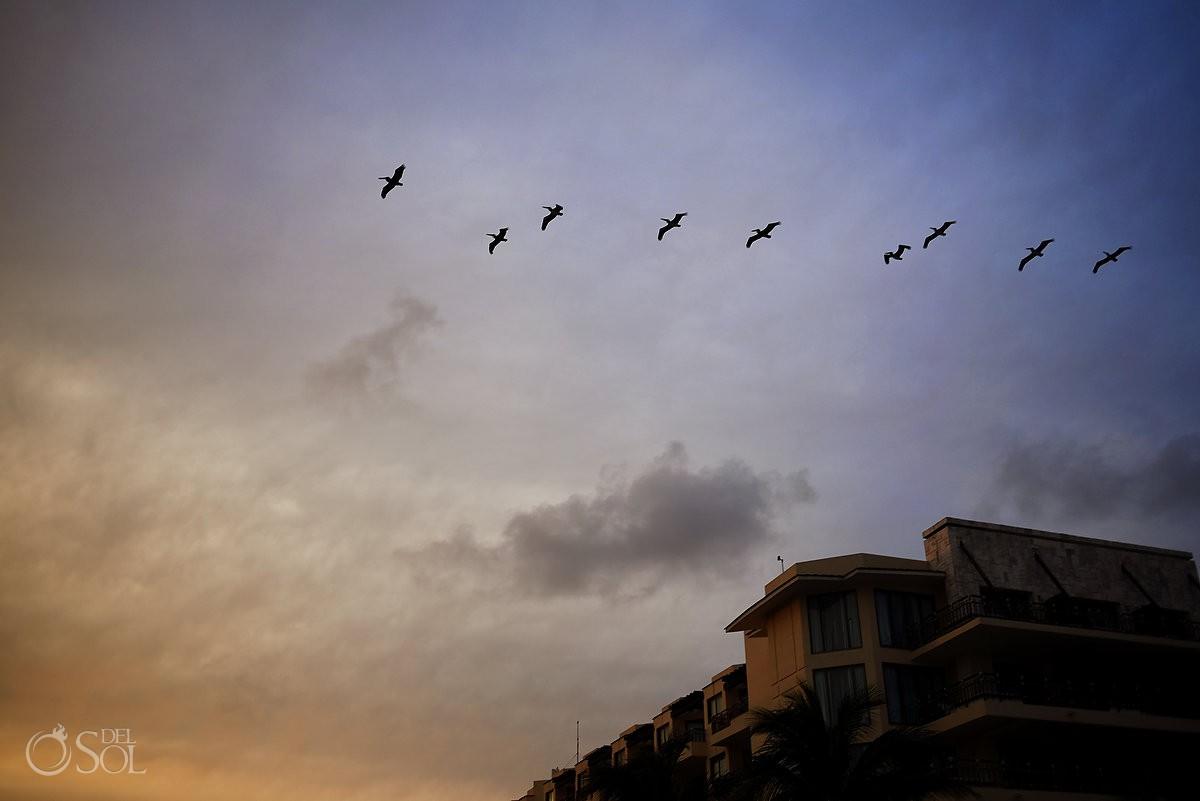 pelicans flying over Dreams Riviera Cancun Gazebo