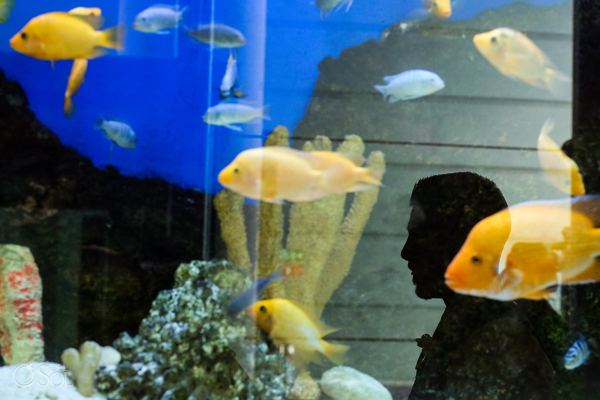 creative groom portrait fish tank silhouette Beach Palace Wedding