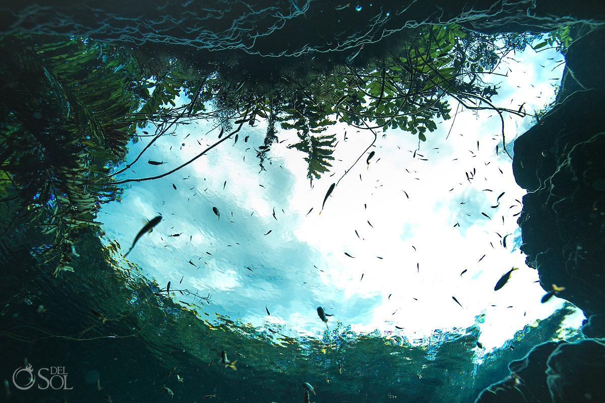 underwater photography riviera maya cenotes