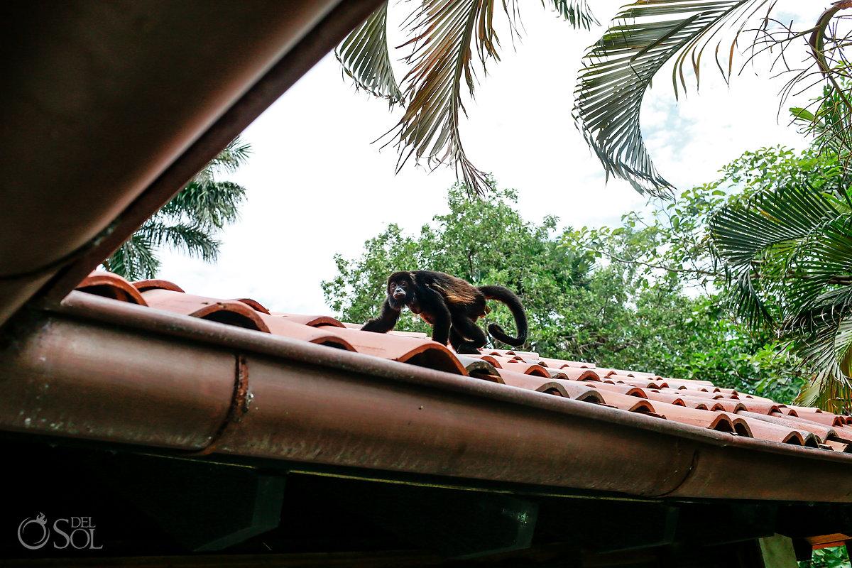 Spider Monkey Tamarindo Guanacaste Costa Rica