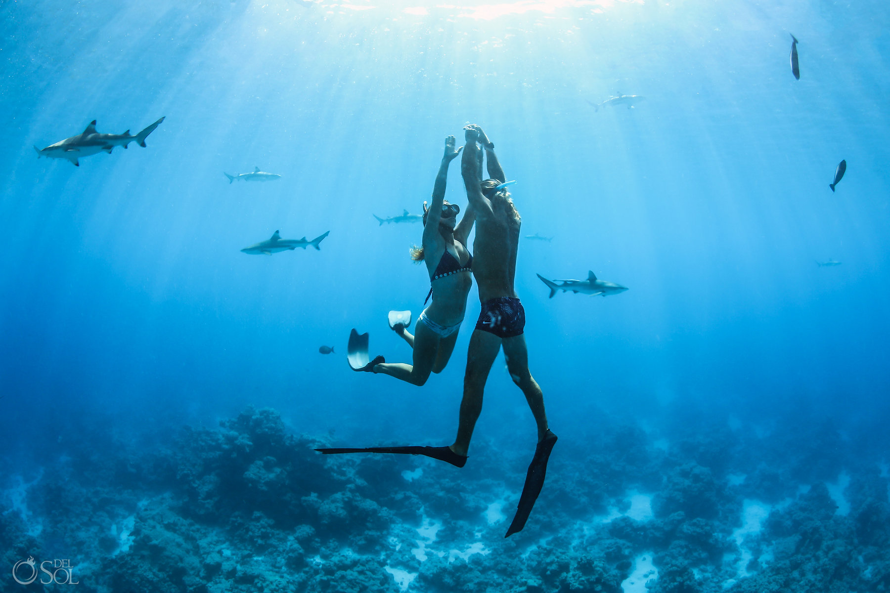 underwater love Tahiti underwater photography freediving with Blacktip reef sharks