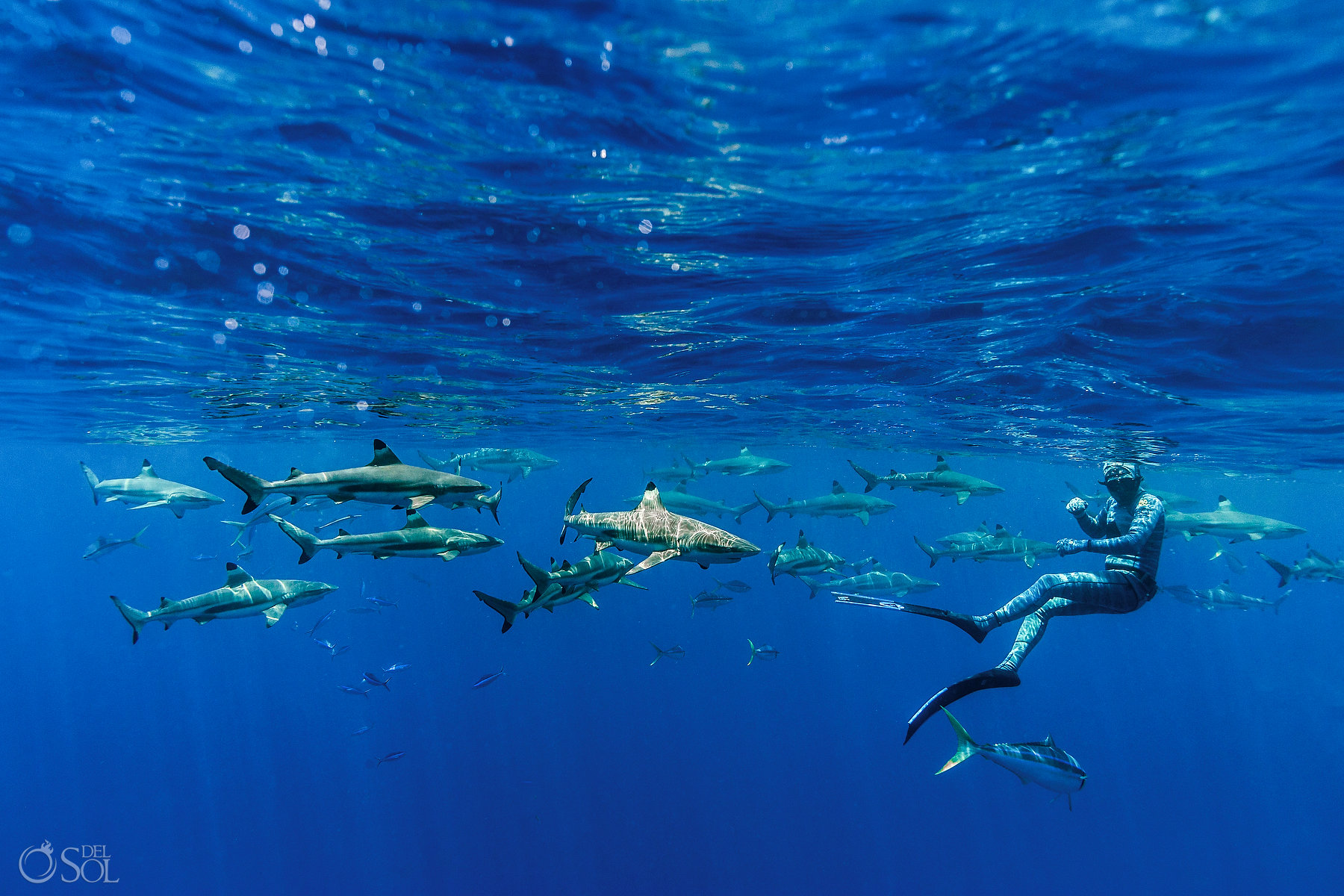 Blacktip Reef Sharks Swimming with Amazing Blue Scene Freediver Tahiti underwater photography