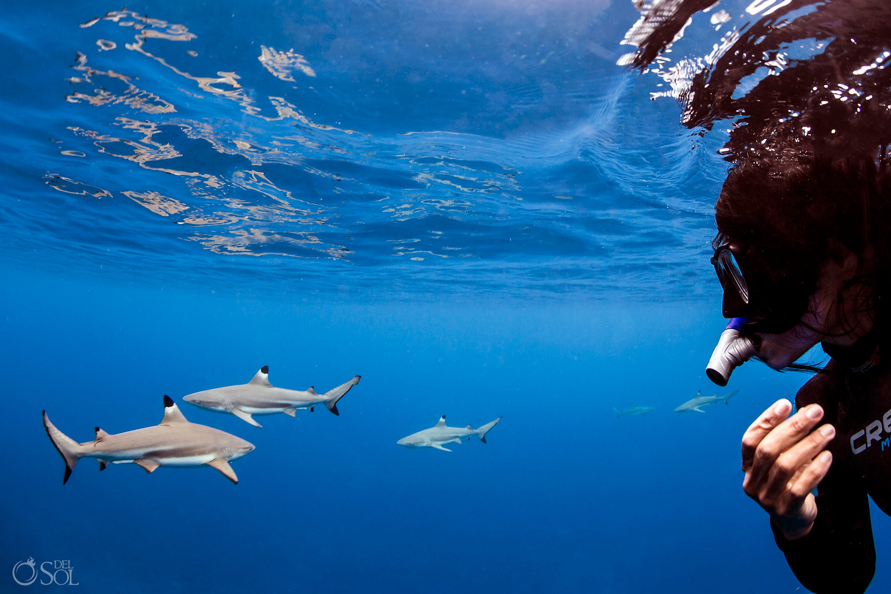 Blacktip Reef Sharks Swimming with Photographer Amazing Blue Scene Reflection Freediver Tahiti underwater photography