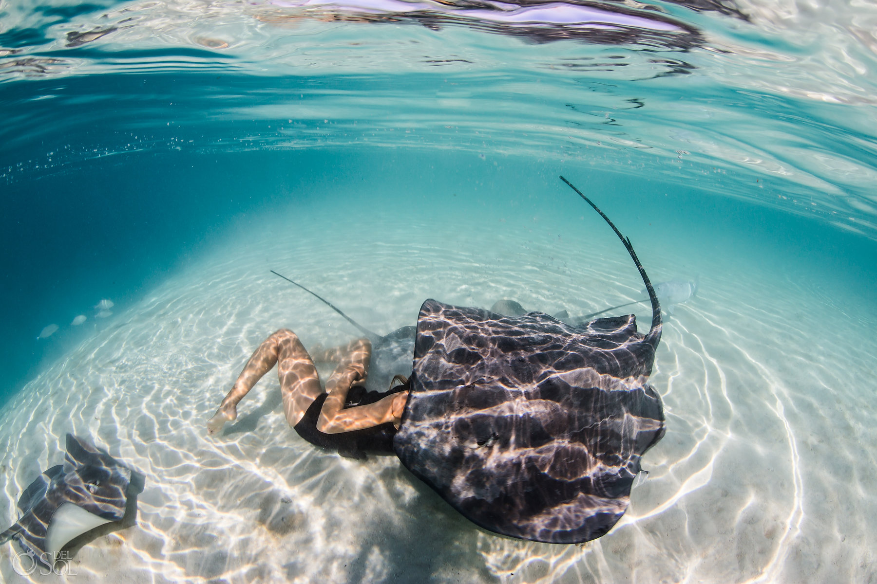 stingray covering woman light reflections clear amazing waters white sand Tahiti underwater photography