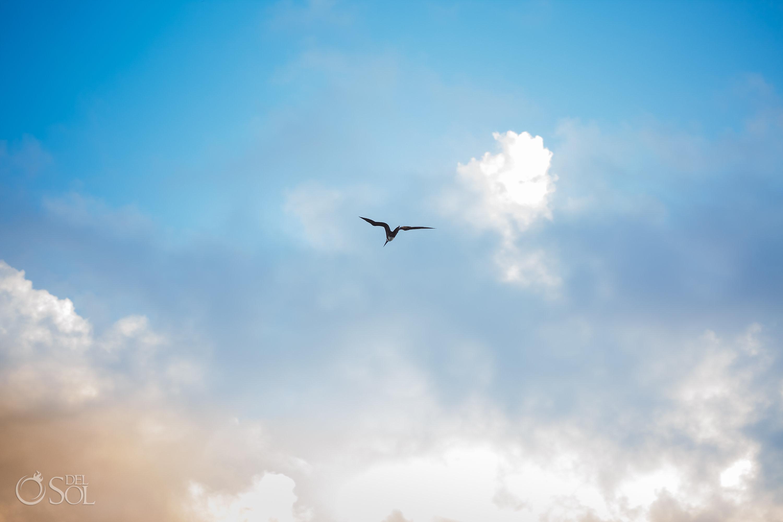 Flying seagull lovely sunrise sky Akumal Elopement moment