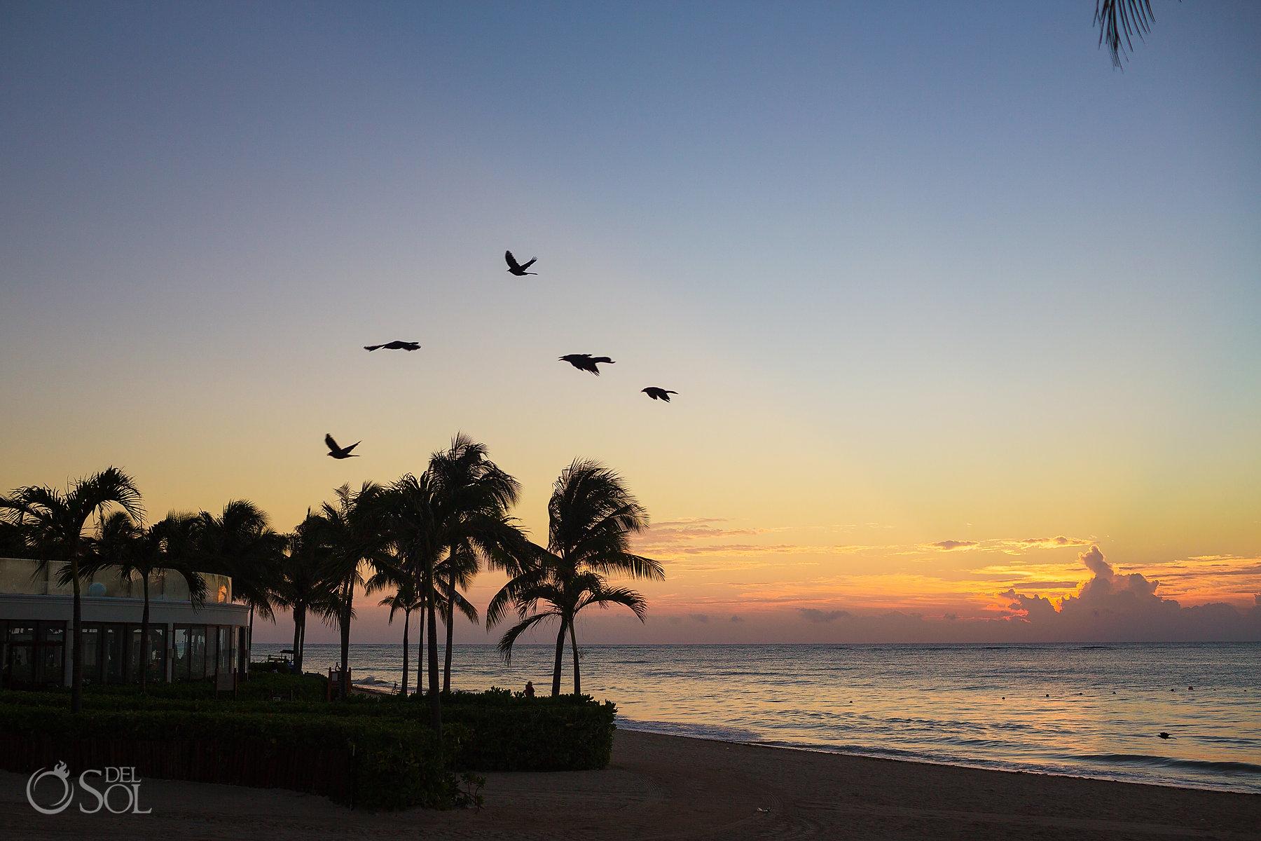Beach tulum sunrise, palm trees sihouette