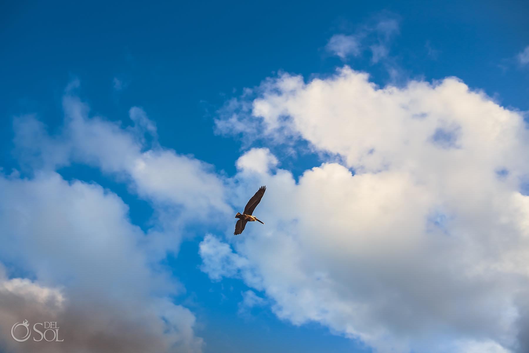 dreams tulum wedding pelican flying in the air
