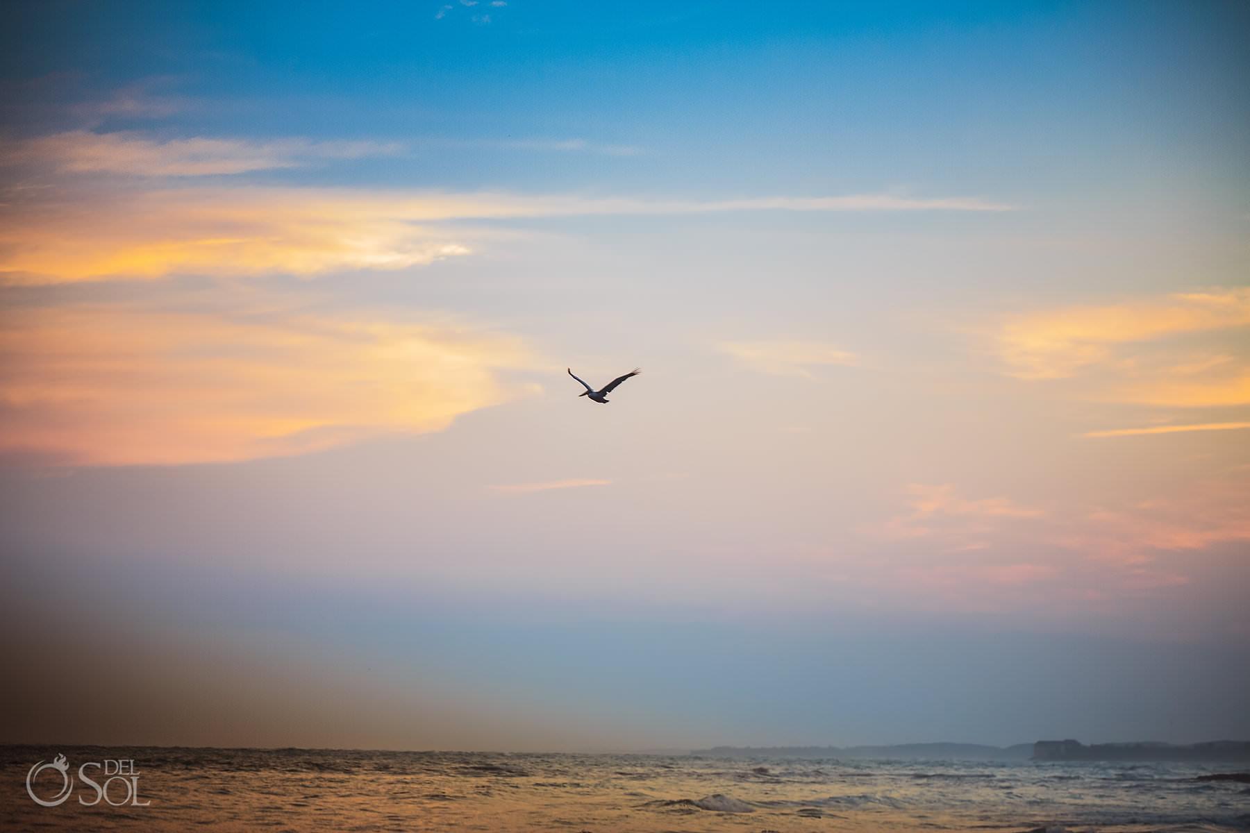 pelican flying over the ocean Dreams Tulum sunset