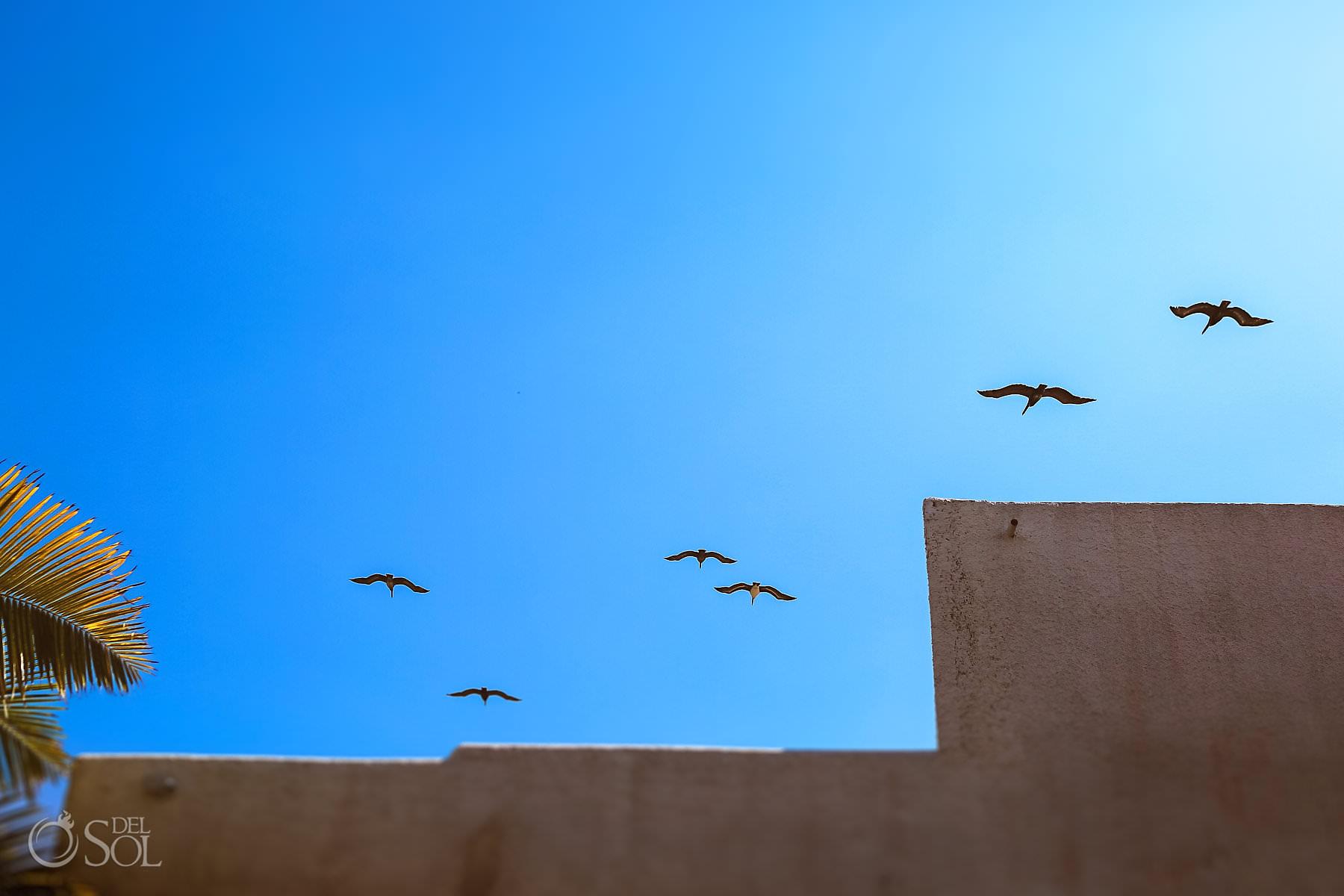 Villa de Valhalla pelicans