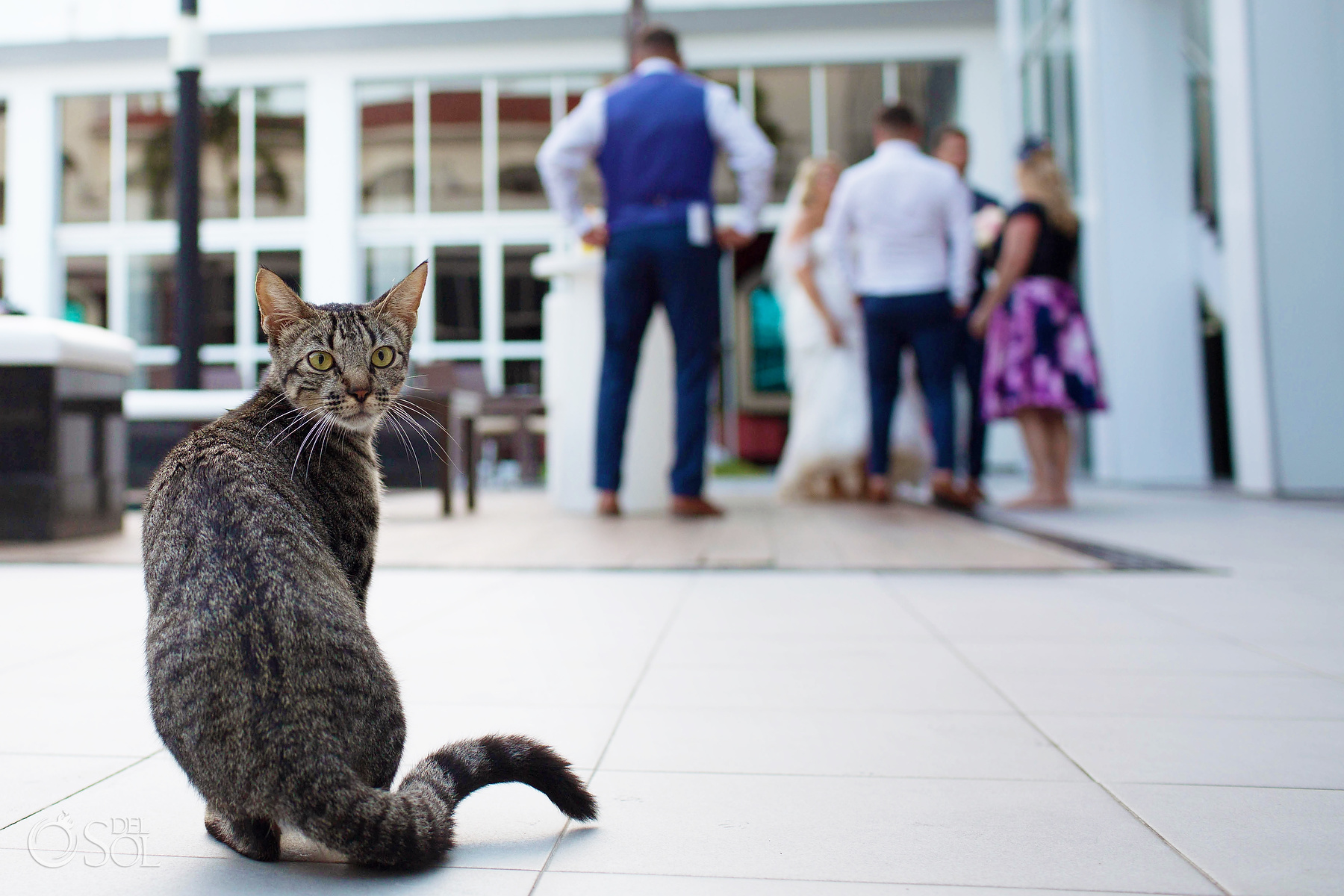 cats in wedding photographer