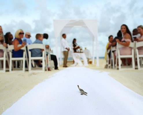 Mexico Wedding Crashers Hatching Turtles walk down the aisle