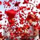 Rose petals for a Patio Deck Now Jade Wedding