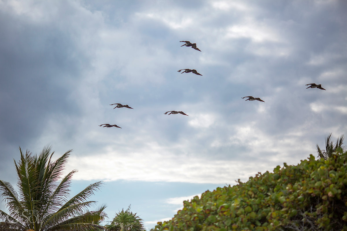 pelicans flying over the beach at Dreams Tulum resort Mexico