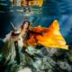 Healing Art Underwater Photography Riviera Maya Mexico #TravelForLove